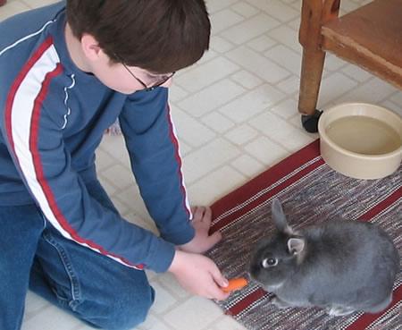 Adopt_a_rabbit