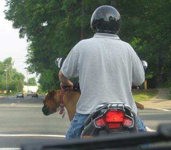 Motorcycle_dog