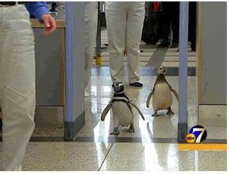 Penguin Terrorists